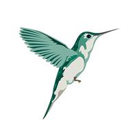 Hummingbird Temporary Tattoo