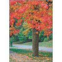 A Fall Stroll