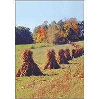 Fall Corn Stalk Field