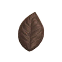 Chocolate Elm Leaf