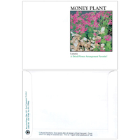 Impression Series Money Plant Seeds