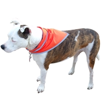 Pet triangle bandanna with reflective binding - medium