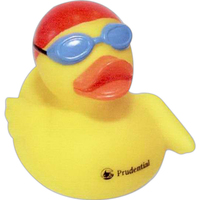 Aquatic duck