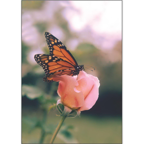 Item #60034 Butterfly and Rose