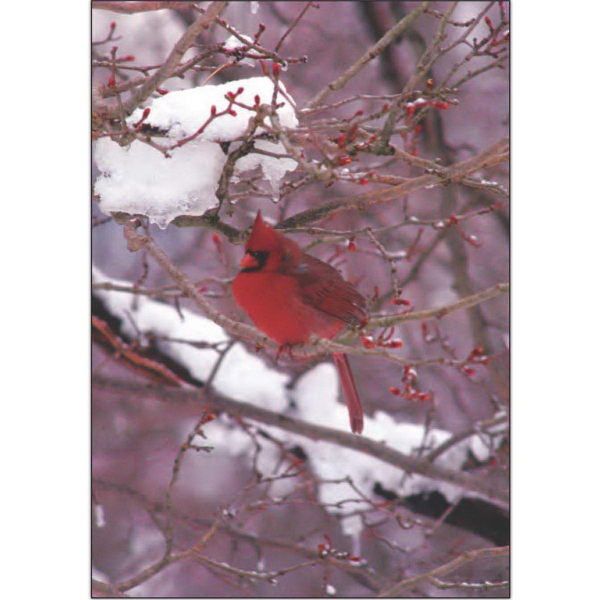 Item #67779 Cardinal on Snowy Branches